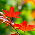 The branch leaves of autumn