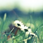 Grass, glare, flower