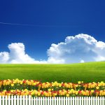 Blue sky, green grass, flowers desktop wallpaper