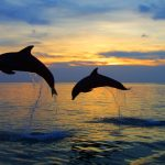 Beautiful hd wallpaper download desktop dolphins