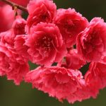 Bright pink spring flowers wallpaper