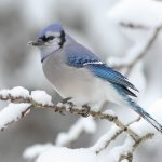 Winter snow tree birds wallpaper