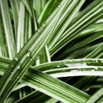 Striped, wet, leaves hd wallpaper