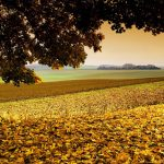 Large trees fall foliage landscape wallpaper