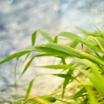 Leaves, photos, wallpaper, grass, nature, plants, macro
