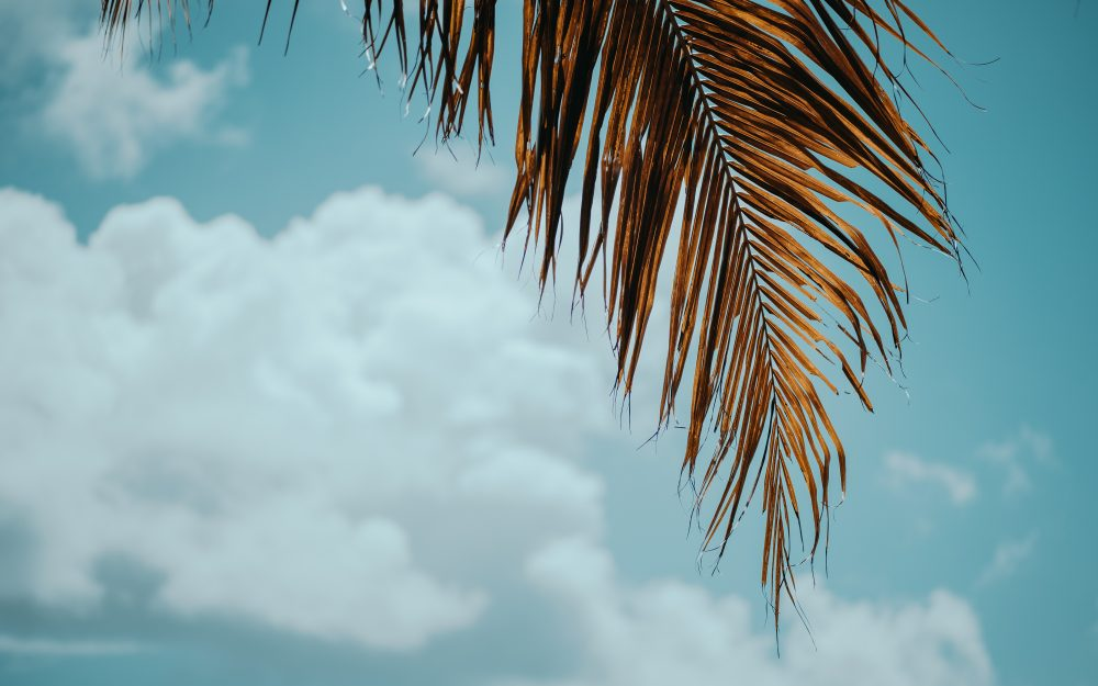 Branch, leaves, palm tree wallpaper