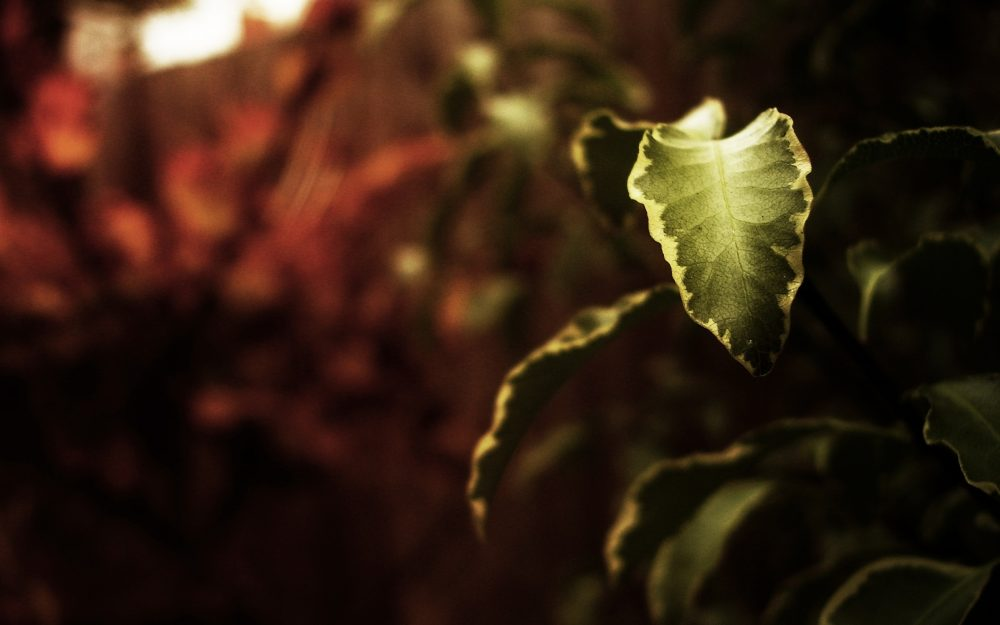 Leaf, wallpaper, nature, picture, plant, background, branch