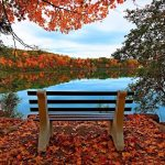 Bench autumn lake of the woods
