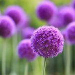 Nice plants and flowers wallpaper