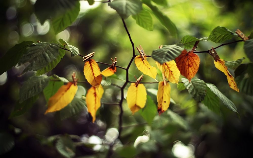 Branch, yellow, leaves, clothespins wallpaper