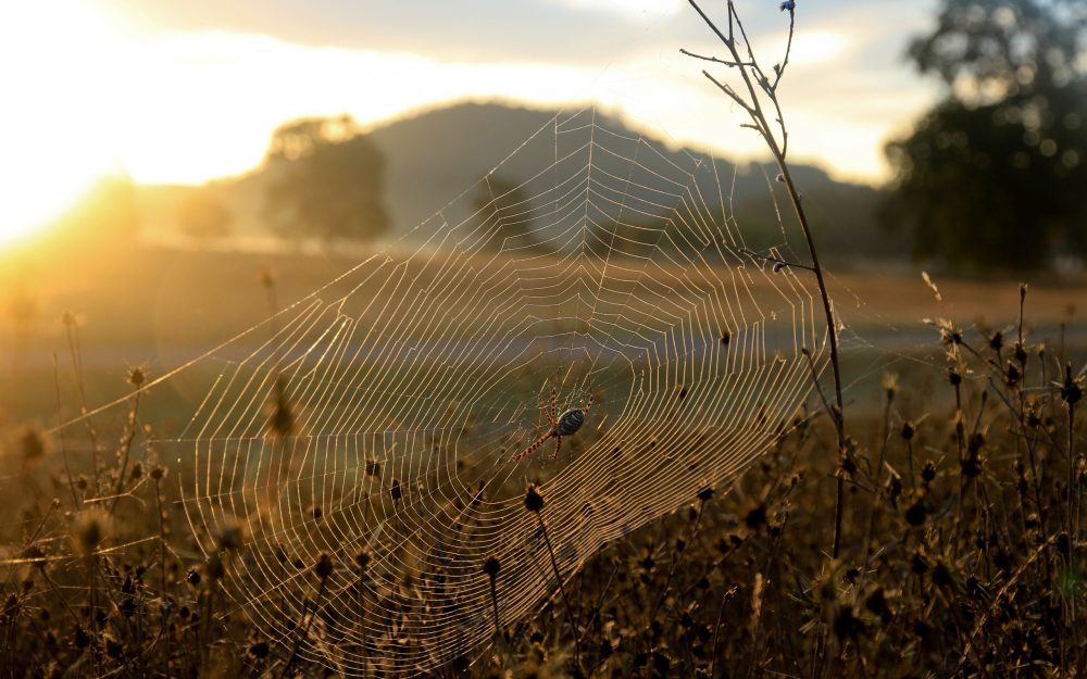 Sun, light, grass, dry, web, spider wallpaper