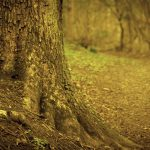 Branches, earth, tree, root, trunk hd wallpaper