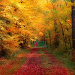 Forest, road, autumn wallpaper
