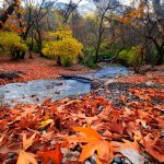 Autumn leaves on the river in the forest