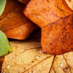 Nature leaves fall
