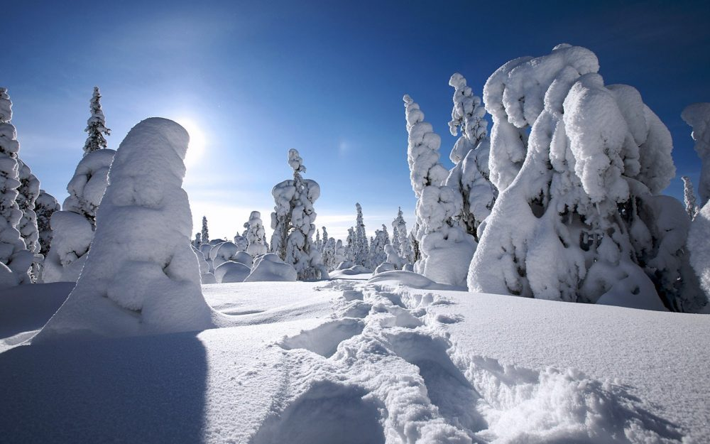 Snow-covered snowy forest in finland widescreen desktop wallpaper