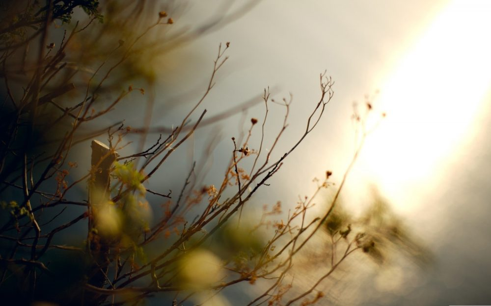 Autumn, branches, photo, wallpaper, nature, plants, background