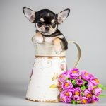 The dog, the dog, puppy, flowers, a pitcher, puppy, pitcher