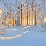 Nature winter snow trees forest sun