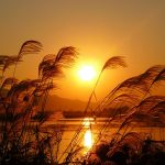 Beautiful sunset landscape picture reed wallpaper