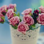 Only small fresh roses beauty hd wallpaper