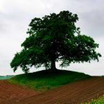 Triangle, tree, arable land, earth