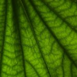 Leaves, wallpapers, pictures, background, green macro, close-up, leaf