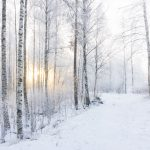 Nature winter snow trees forest