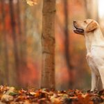 Forest, autumn, leaves, dog, wallpaper