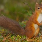 Forest squirrels, look at you, cute face, long beard, cute forest animals wallpaper