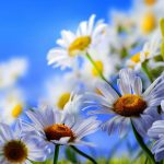 Hd beautiful fresh flowers wallpaper