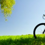 Grass, mood, wood, leaves, trees, bicycles, nature