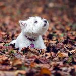 Leaves in beautiful sad dog wallpaper