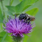 Flower, bee, insect