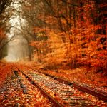 Autumn leaves beautiful wallpaper