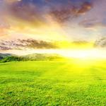 Green grass under the sun landscape wallpaper