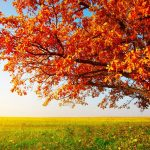 A tree fall on the prairie hd wallpaper