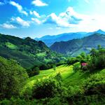 Green seductive natural landscape desktop wallpaper