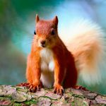 Forest, trees, squirrels, you see, animal themes pictures, wallpaper