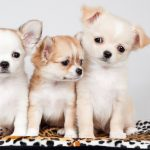 Three small dog, best friend, confused, sad, melancholy, expression, dog wallpaper