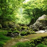 Green forest, trees, rocks, streams, natural scenery wallpaper