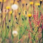 Small fresh spring flowers and plants beautiful wallpaper