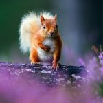 Meng meng, squirrels, flowers, trees, bark, background images, wallpaper animals