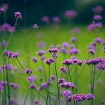 Natural purple flowers picture desktop wallpapers