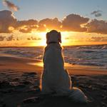 Dog on a sunset background
