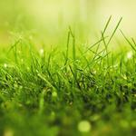 Dew grass green nature wallpaper
