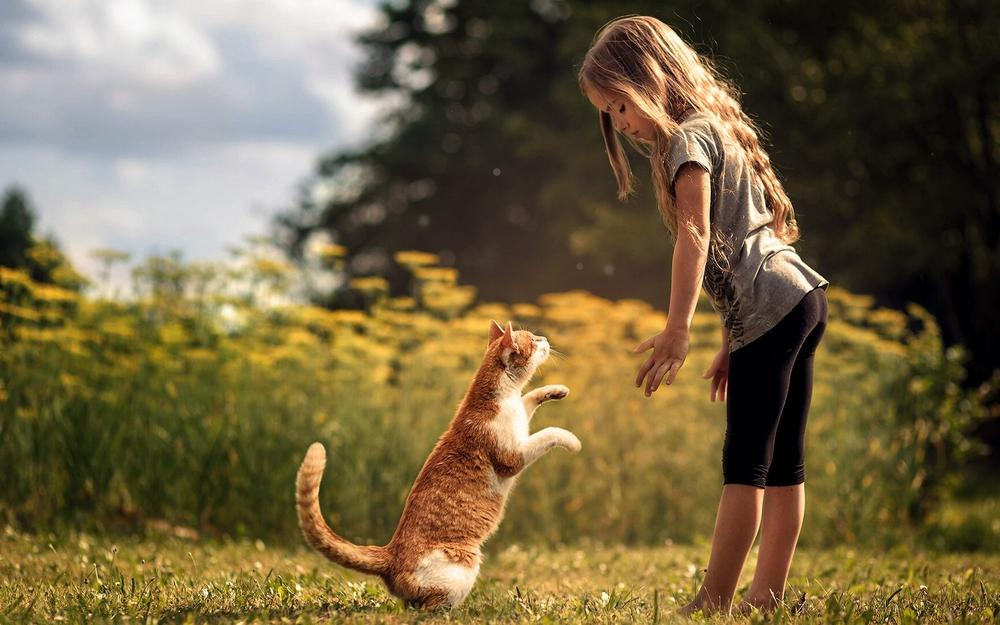 The little girl, cat, stand up, friends, woods, meadows, natural wallpaper