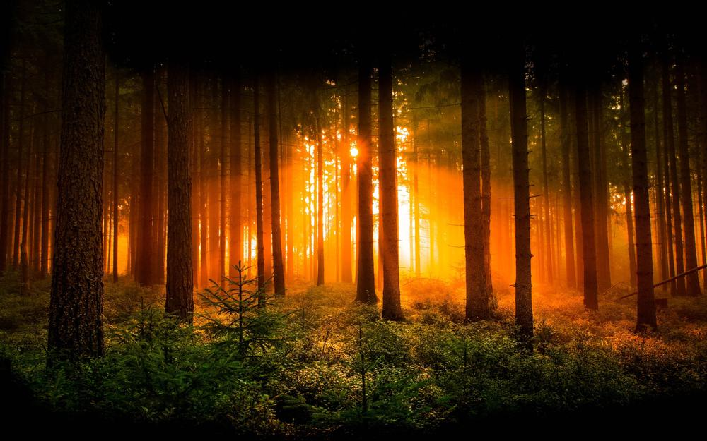 Rays, Evening forest