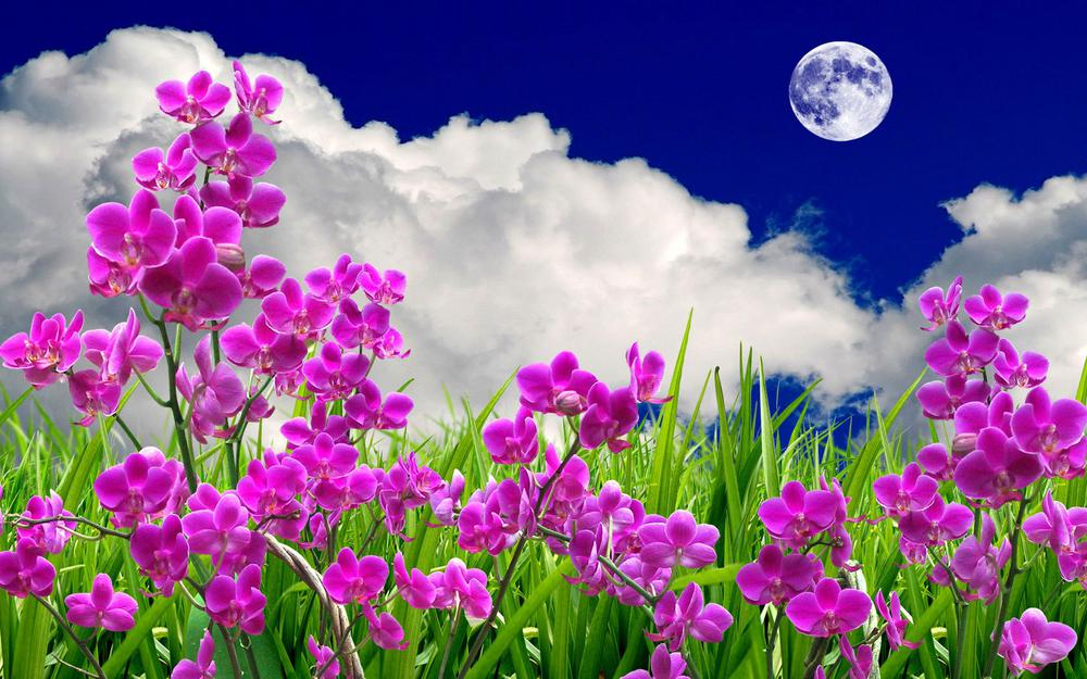 Beautiful flowers and plants wallpaper