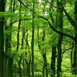 Forest, foliage, leaves, tree leaves, green, trees